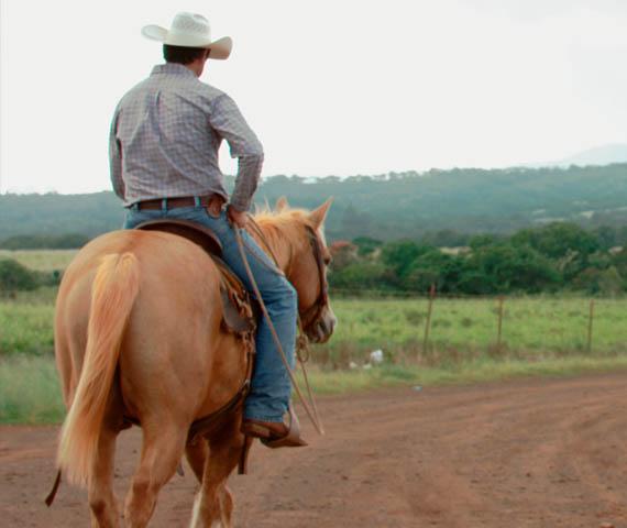 Kunoa Cattle - Mana Up